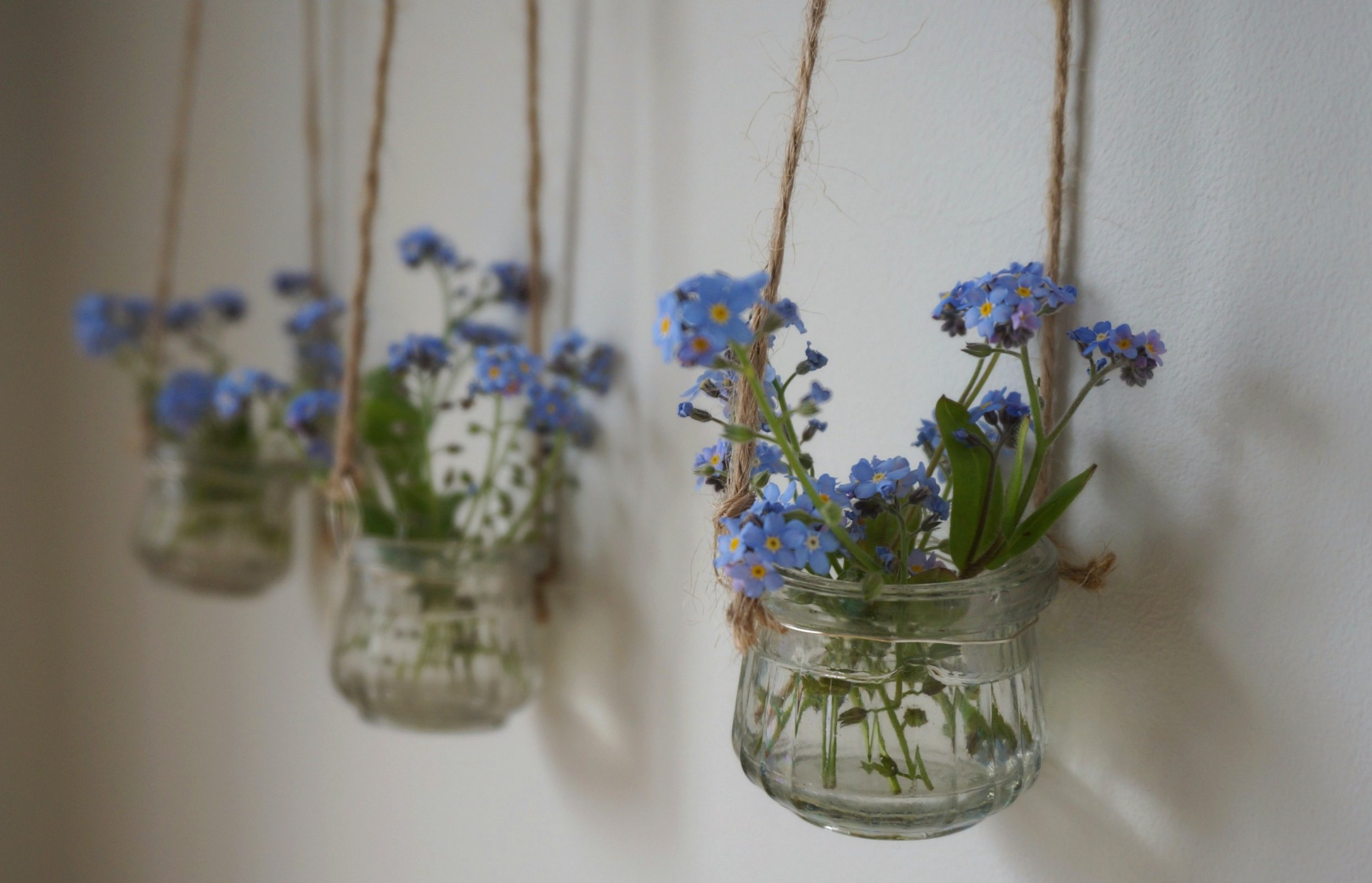 Forget-me-nots in vases