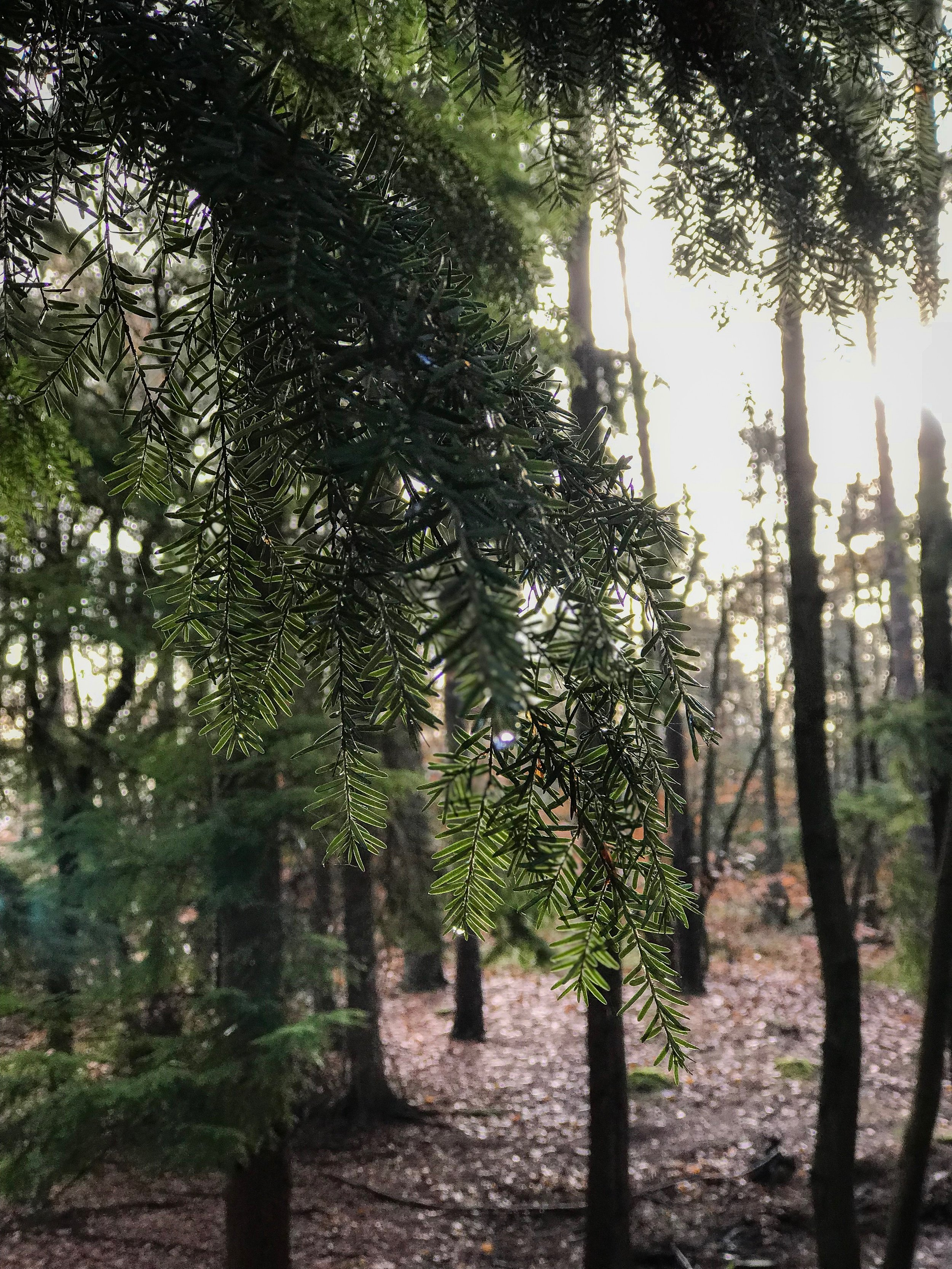 The beautiful forest adjacent to the heath