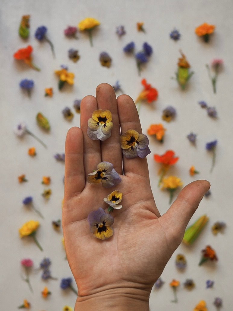 Pansies and Violas edible flowers