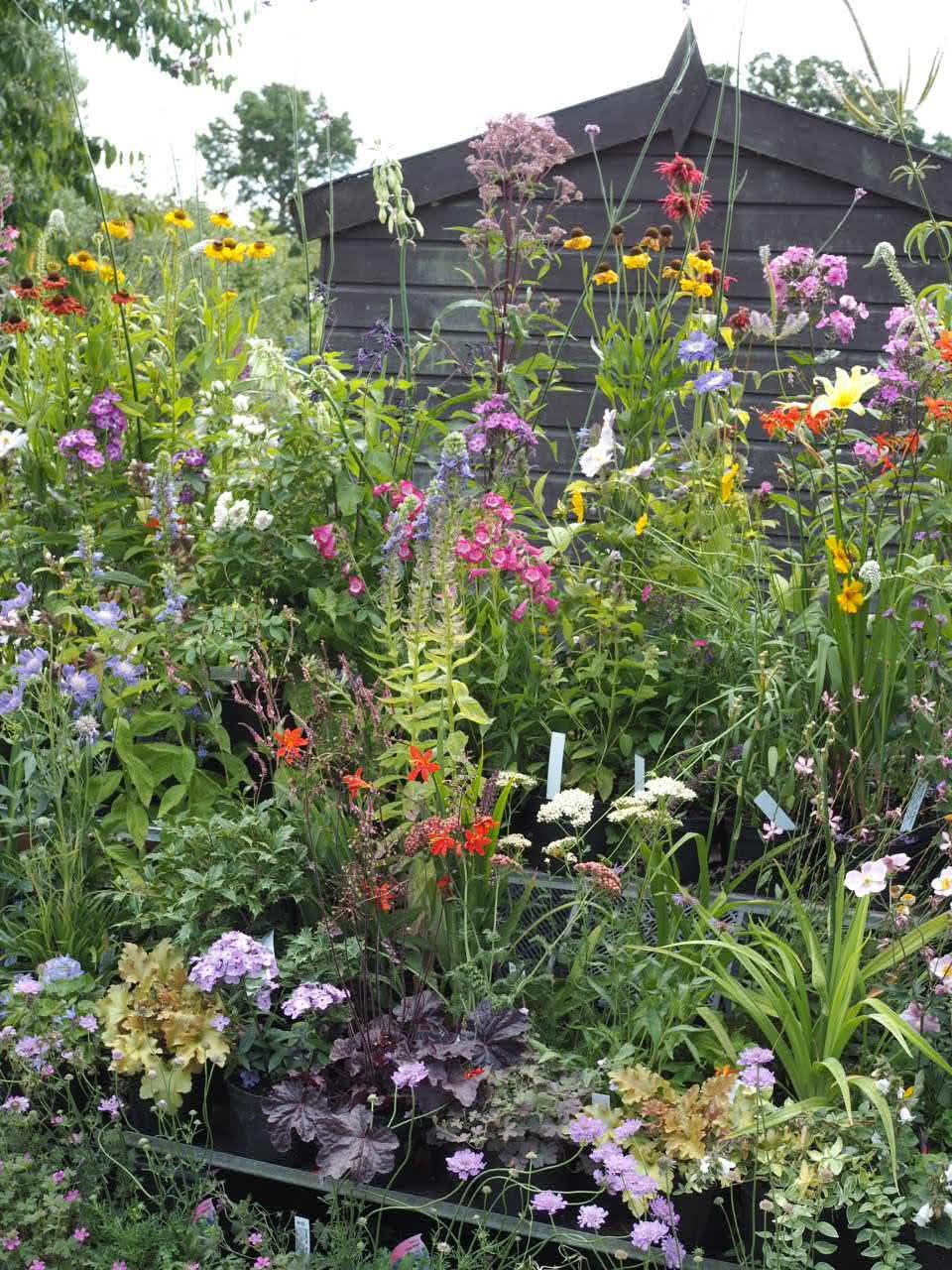 West acre gardens display of garden flowers
