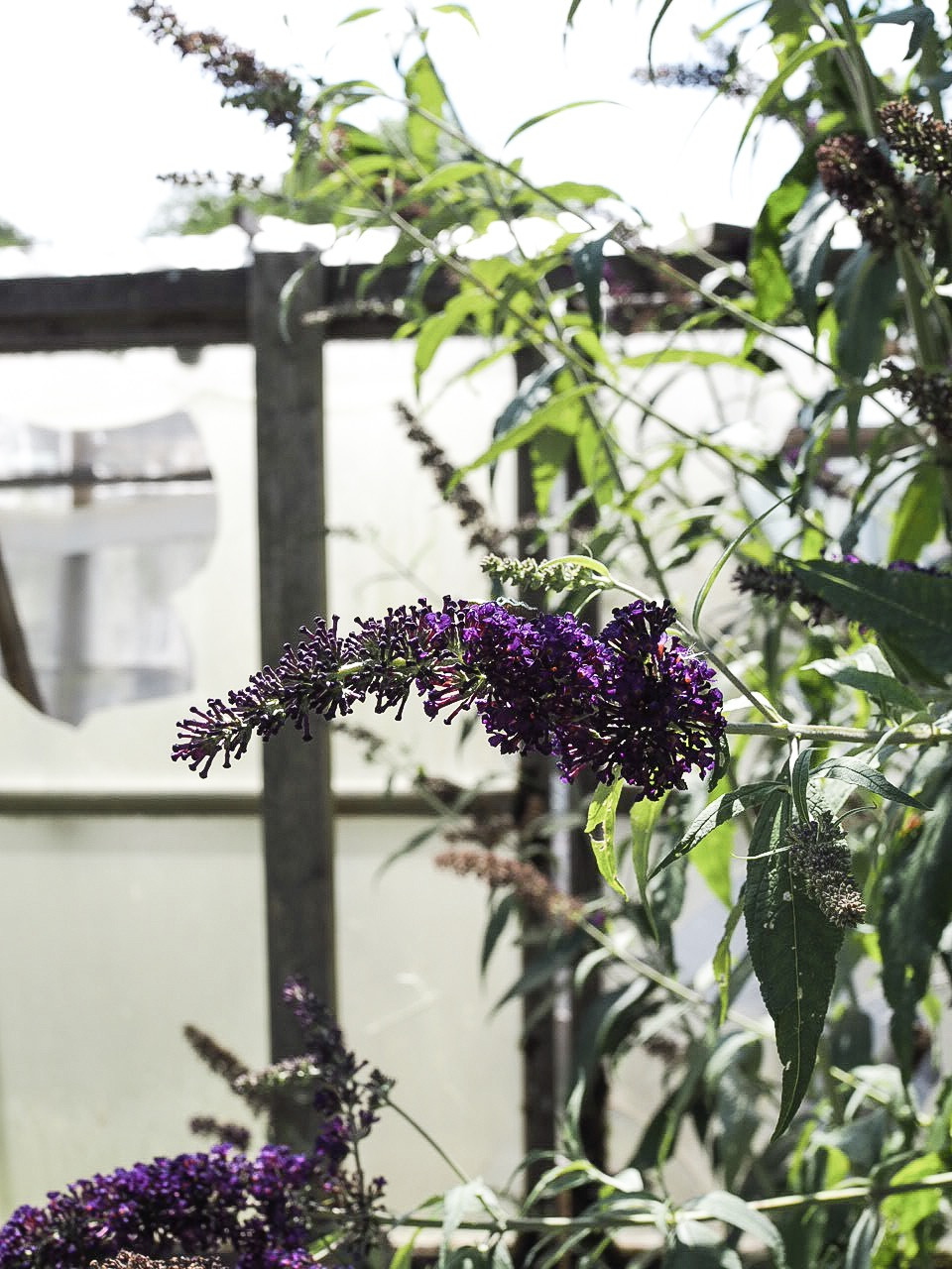 Glass houses and wildflowers in west acre gardens