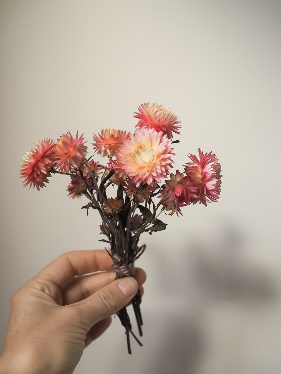 everlasting, strawflowers helicrysium