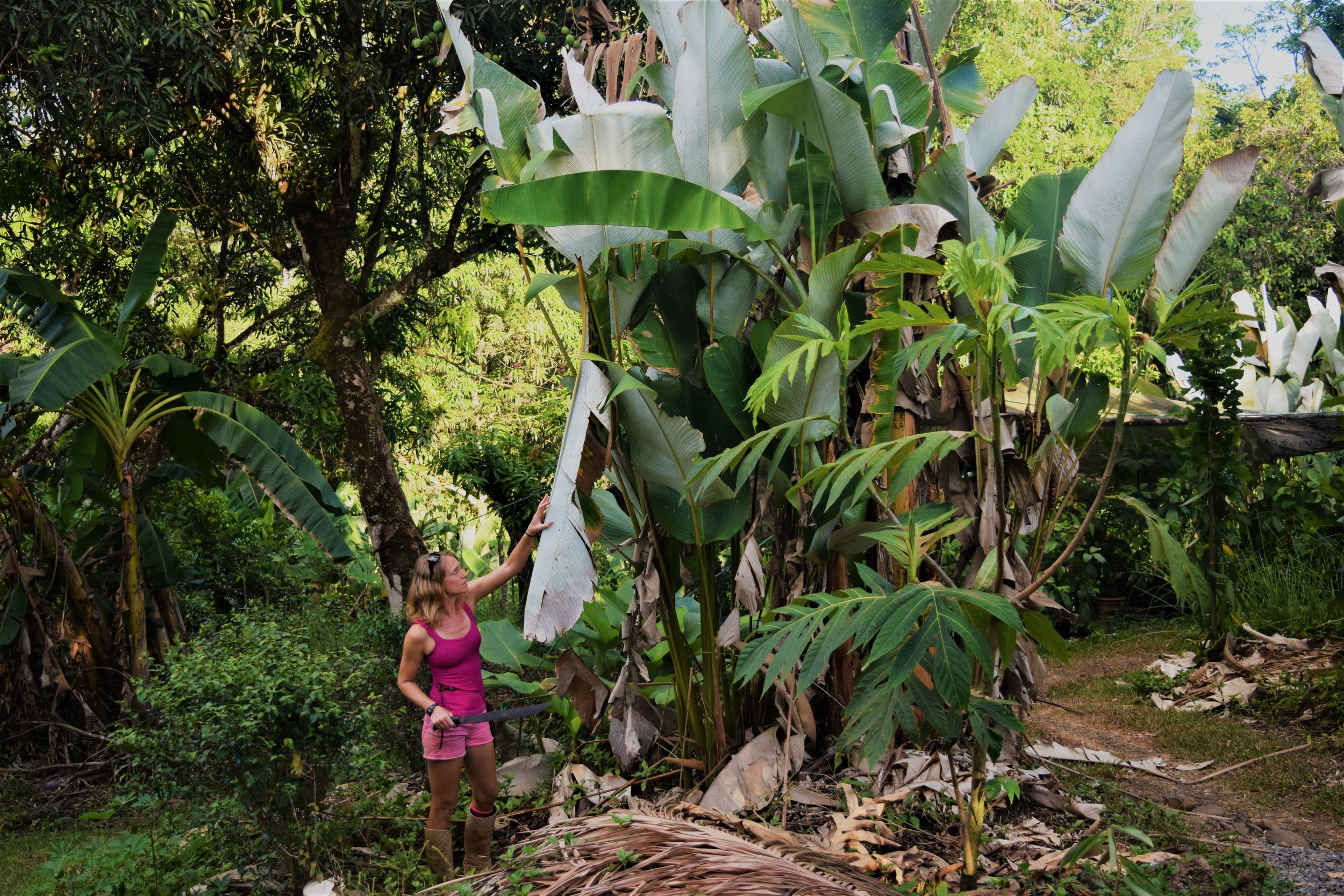permaculture central america