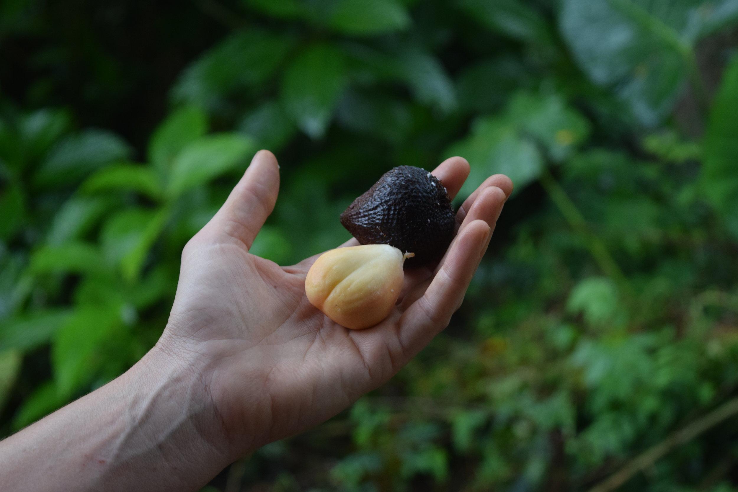 Harvested Fruit