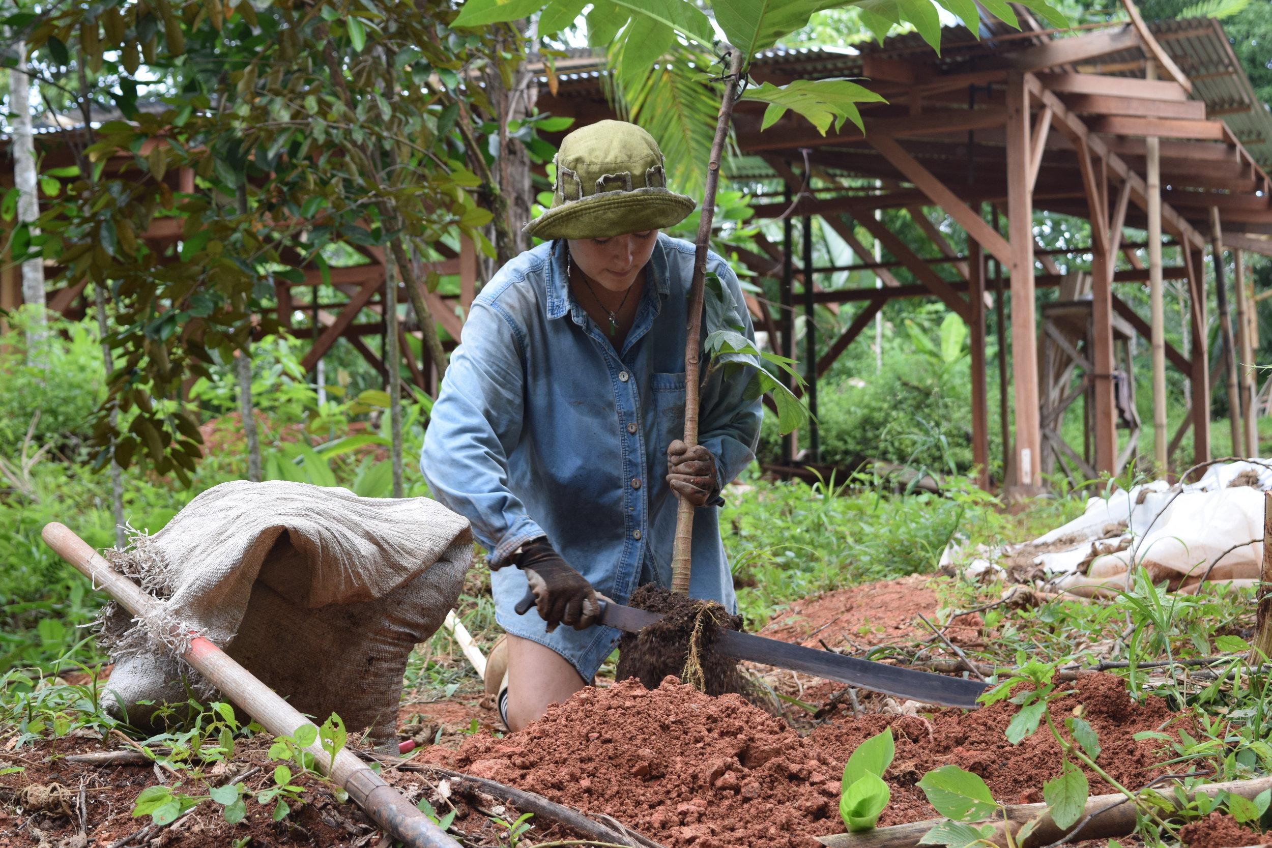 permaculture costa rica