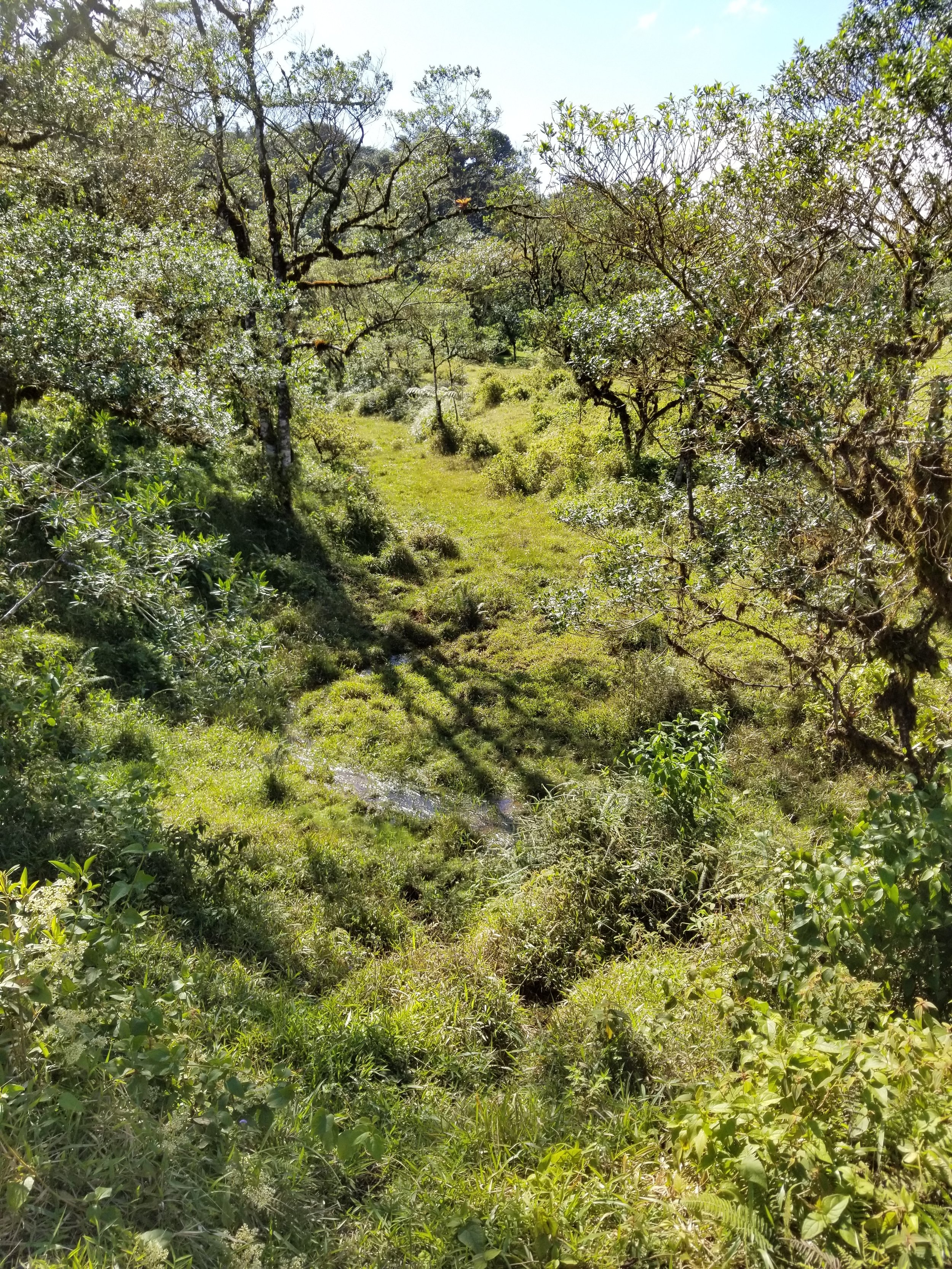 Riparian zone near San Ramon, Costa Rica