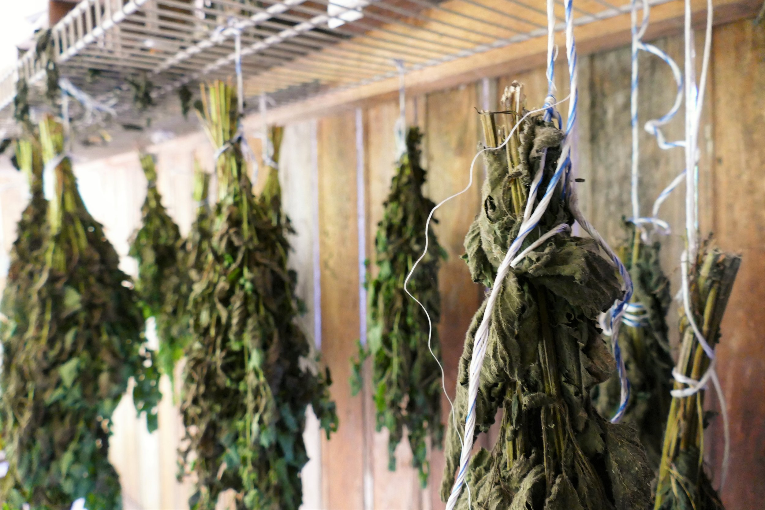 herbs drying permaculture