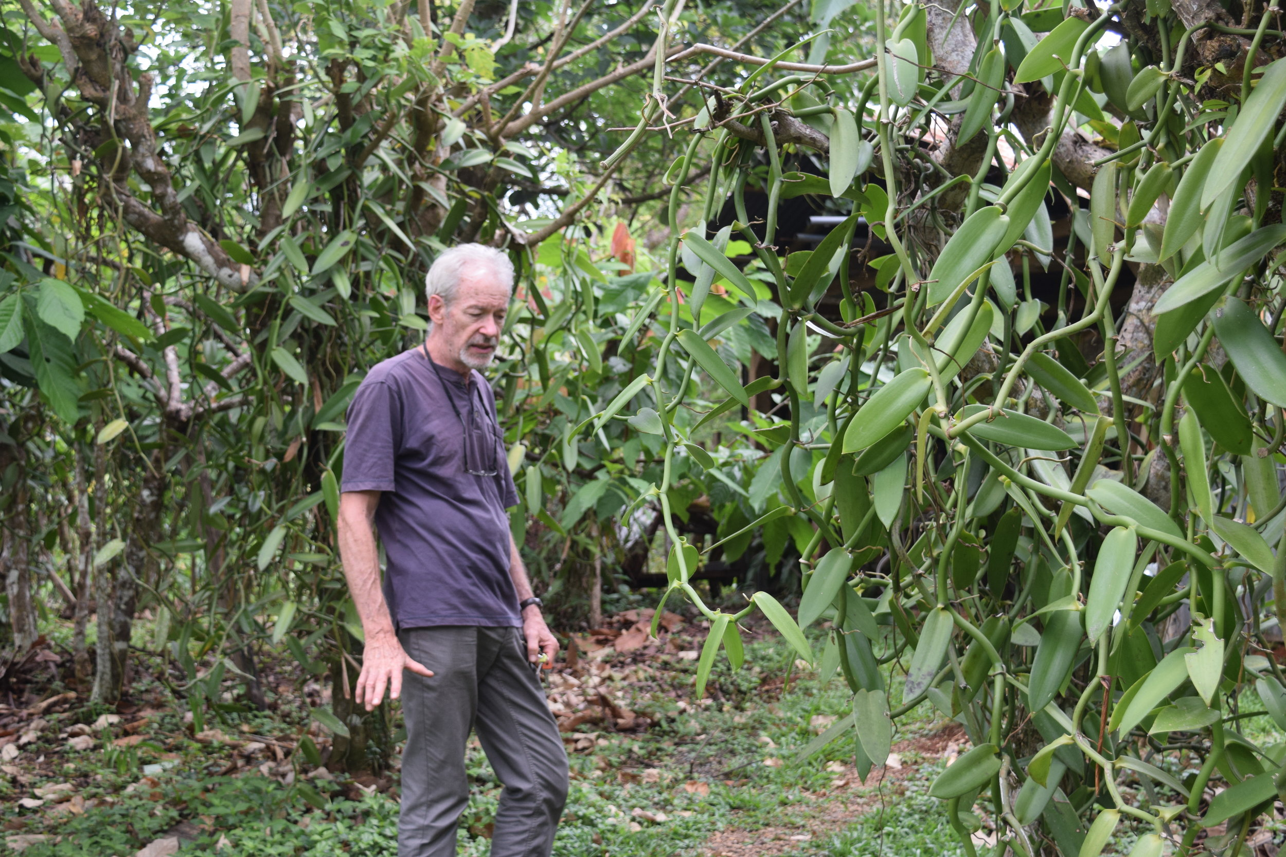 Henry Karczynski giving a tour of his vanilla plantation.