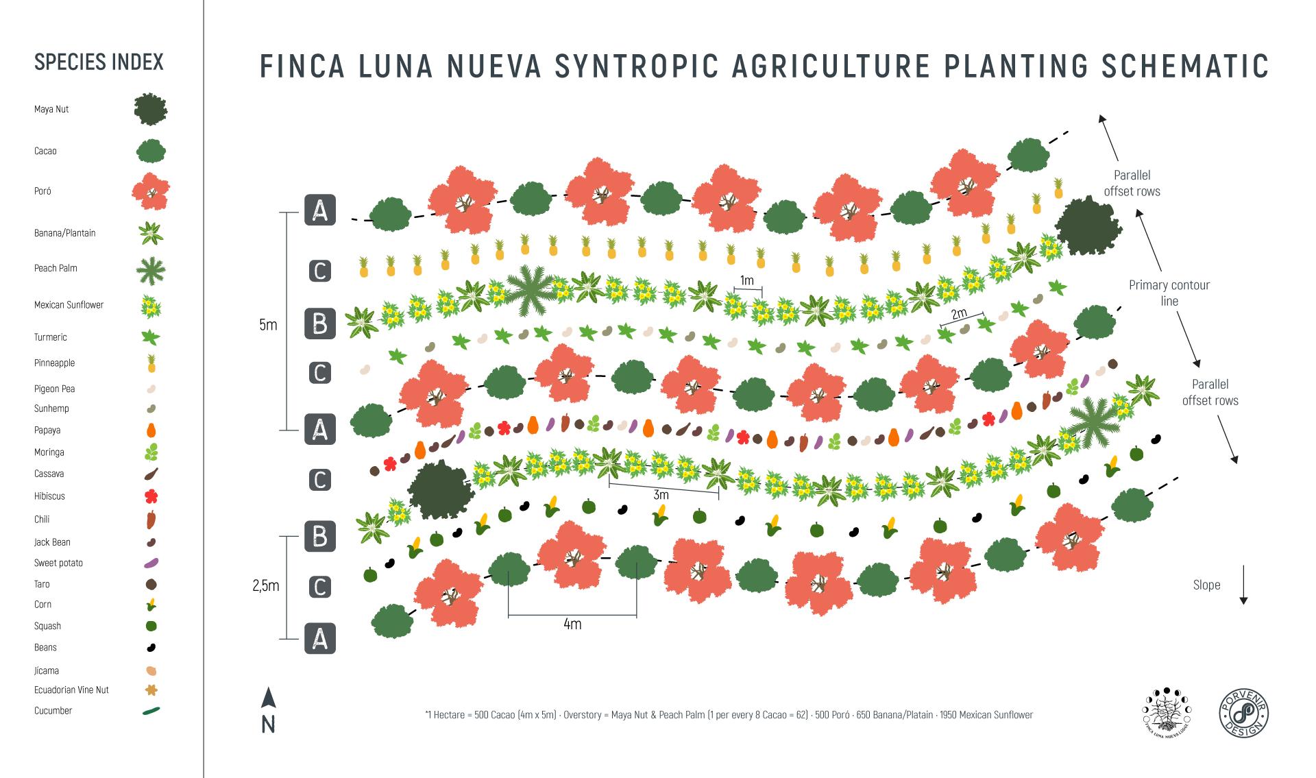 Syntropic Farming Costa Rica