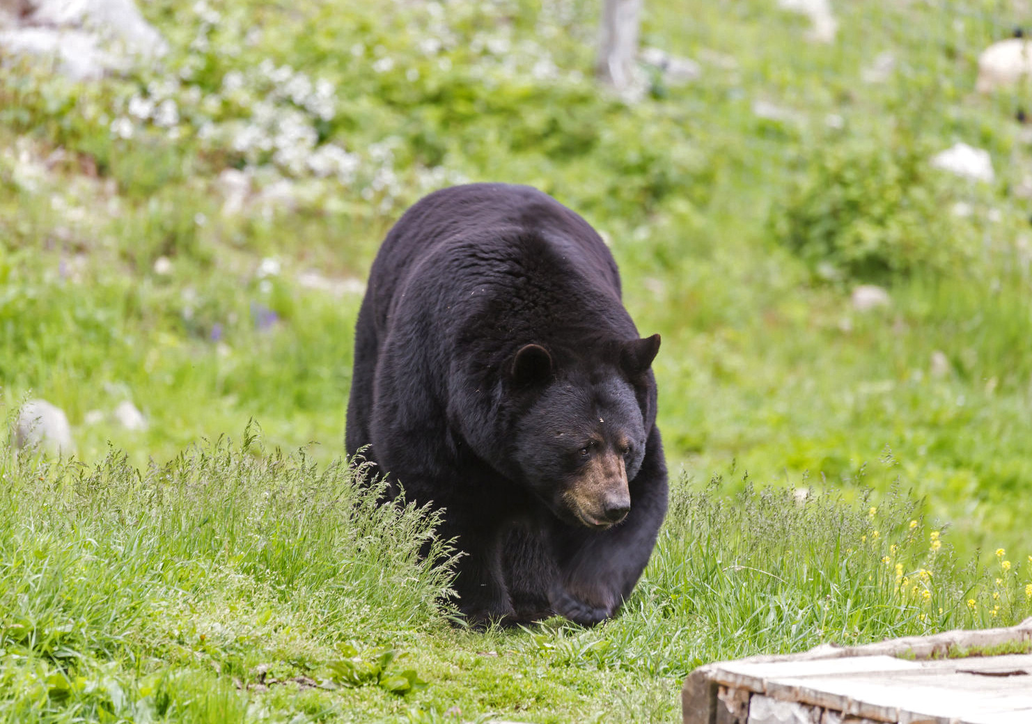 Bear Hunting - Our bear hunts are fully guided and include accommodations, boat, motor, gas, Active bait stations, and retrieval assistance.