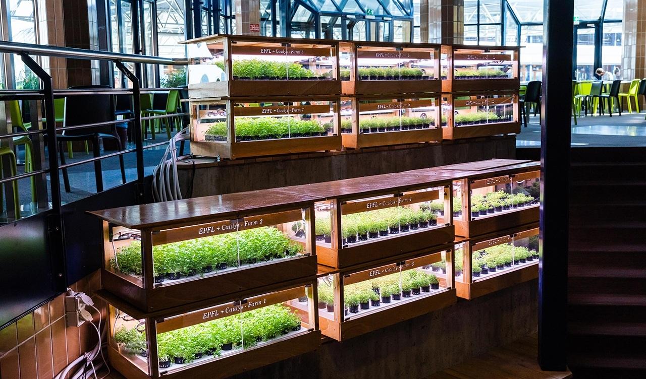 Caulys%E2%80%99s-greenhouses+FoodHack+Pitch