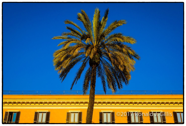palmspansteps.jpg