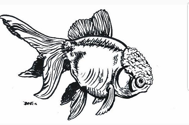 #goldfish #sumiink visit me at The Secret History Living In Your Aquarium - Youtube @solidgoldaquatics