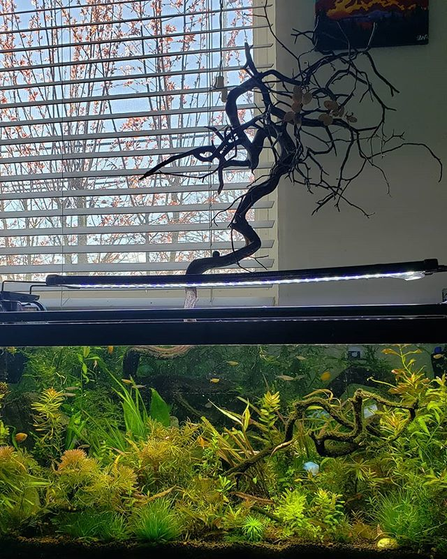 """one of my nature aquariums. This one is entitled """"Volta"""""""