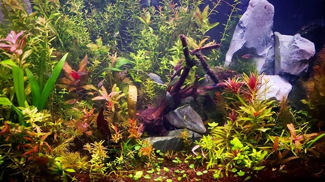 65 Liter aquarium, naturally stocked and an aquascaping dream to work with