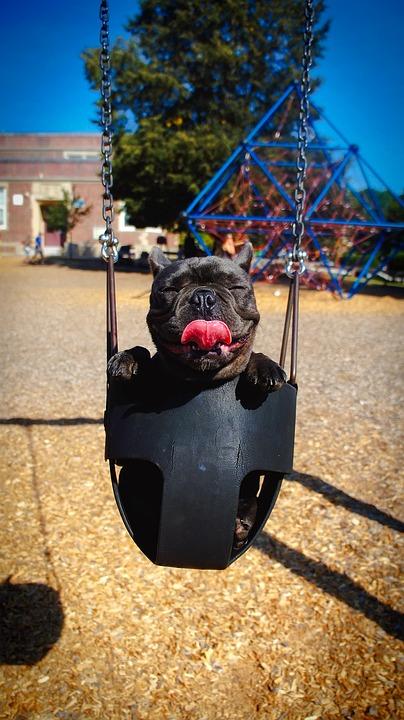 dog in swing.jpg