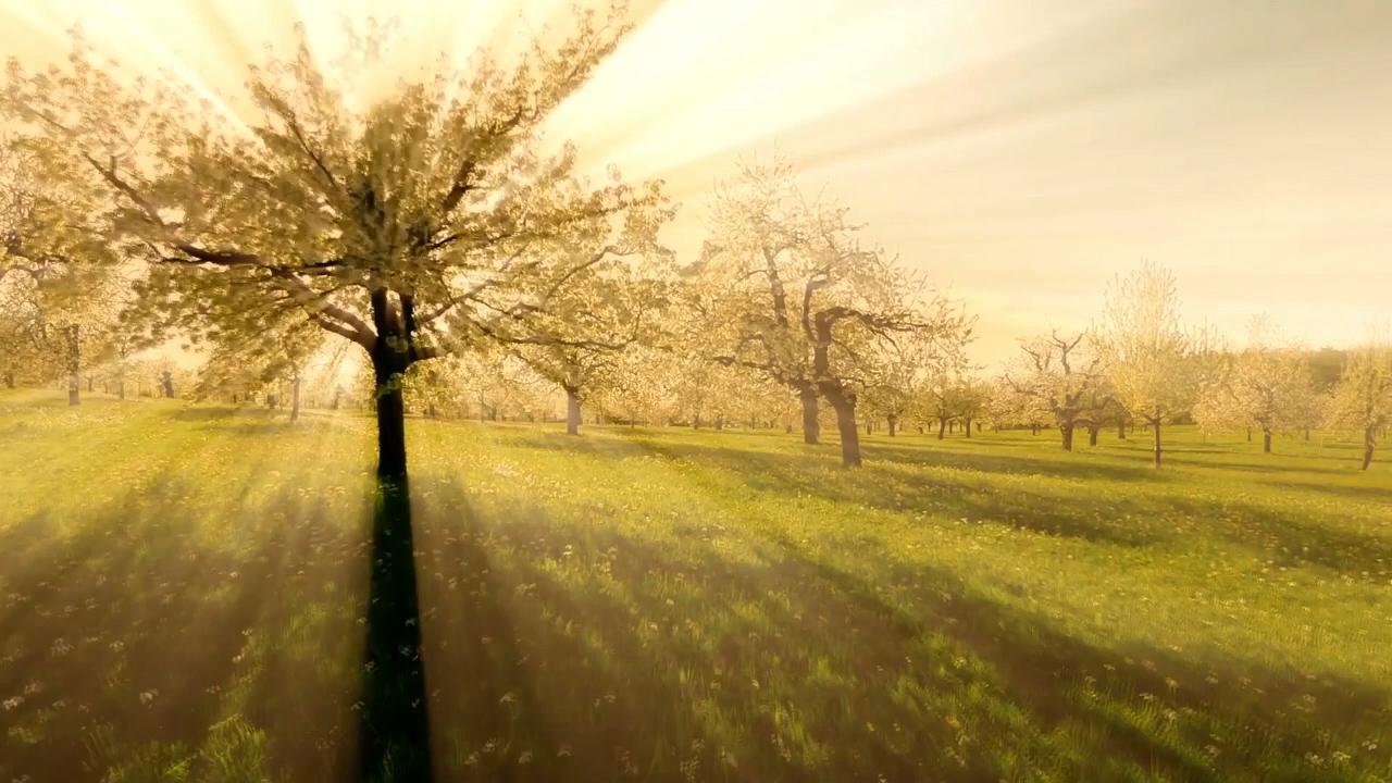 TreeCreation.jpg