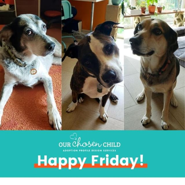 It's not National Dog Day, just a normal Friday here with our four-legged friends!