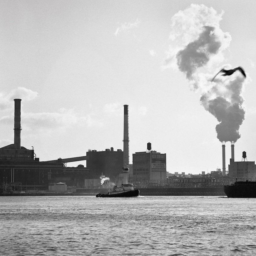 East River Gulls