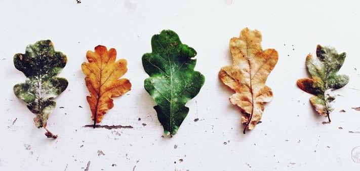 leaves-970188__480.jpg