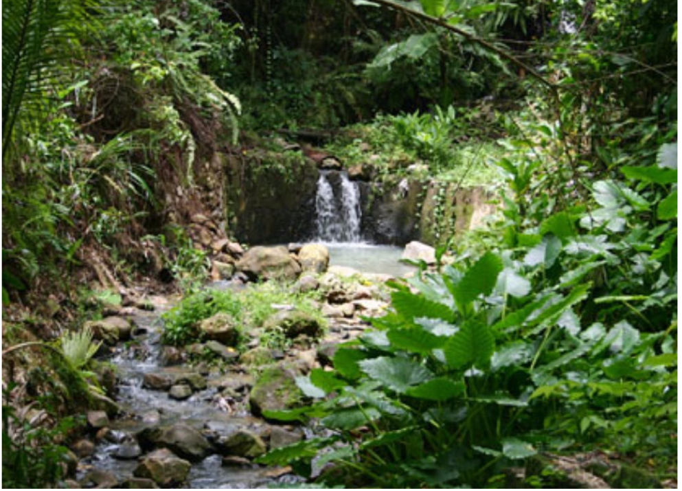 RAINFOREST EXCURSION   If you are a little adventurous and up for a bit of a hike you will be rewarded with spectacular scenery on a trip into the St Lucia rainforest. If you've seen the beaches and fancy getting up and about away from the beaten track, then you can choose between 3 different trails from beginners to advanced- all which lead to secluded waterfalls in the rainforest