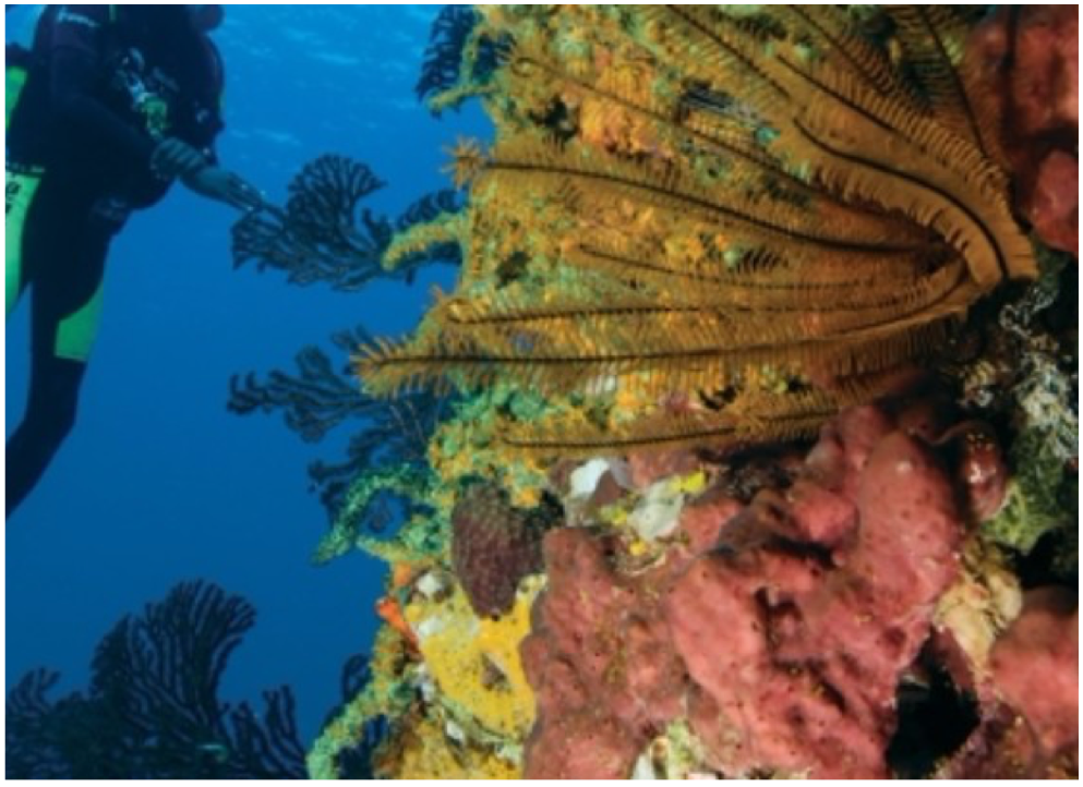 SCUBA-DIVING AND SNORKELLING   Scuba diving experiences catering for both beginners and experts can be found all around the island. From boat dives to night dives, surround yourself with some of the Caribbean's most colourful and serene deep-sea wildlife.