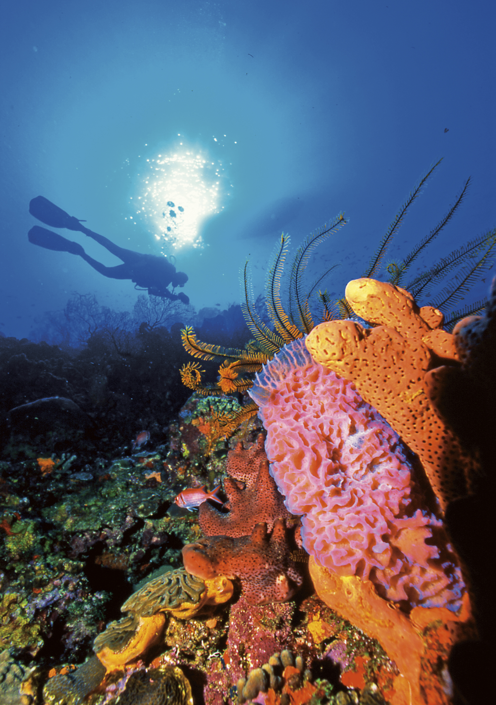 anse chastanet - scuba diving.jpg