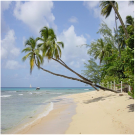 MULLINS BEACH   A really popular Barbados beach, Mullins beach, located in the parish of...  More