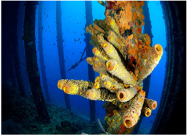 SS ORANJE NASSAU   Accessible from the Seaquarium area, a 3 minutes southeast swim will take you to the wreck of this Royal West India Company 1884 steamship, grounded in 1906 during a heavy storm. There you will be able to observe plenty of small reef fish, healthy coral, as well as morays.