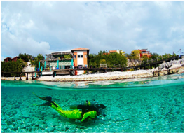 RIF SINT MARIE   Healthy reef located at Coral Estate, where divers can spot parrot fish, sea turtles, barracudas, trumpet fish, puffer fish, amongst others. Check in with the local dive shop before using the pier and heading to the reef.