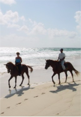 HORSEBACK RIDING    A guided horseback riding tour could be an unforgettable way of discovering Curaçao, taking you through some of the island's most unspoiled trails.