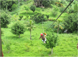 ANTIGUA RAINFOREST CANOPY TOUR   What best than this unique and fun eco-tour to discover the island's natural beauty in all its splendour!With a state of the art safety system, staff training and inspections conducted by the ACCT, world leaders in challenge course equipment, this canopy tour gives visitors a chance to take their exploration of Antigua on another level - literally!