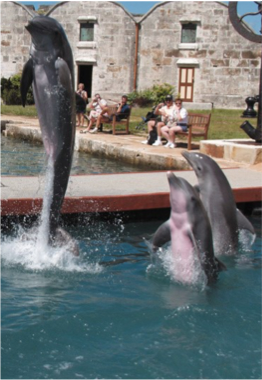 ROYAL NAVAL DOCKYARD & NATIONAL MUSEUM OF BERMUDA    The Dolphin Quest, for a chance to get acquainted with the mammal and learn about the important role played by the country in preserving their natural habitat.