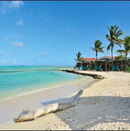 SOROBON BEACH   Located on the southeastern coast of Bonaire, near Lac Bay, this beach is...  More