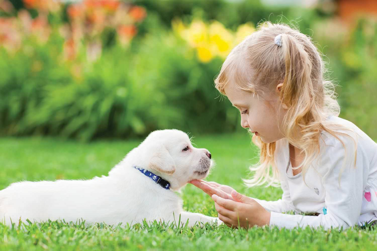 Girl and puppy in green grass