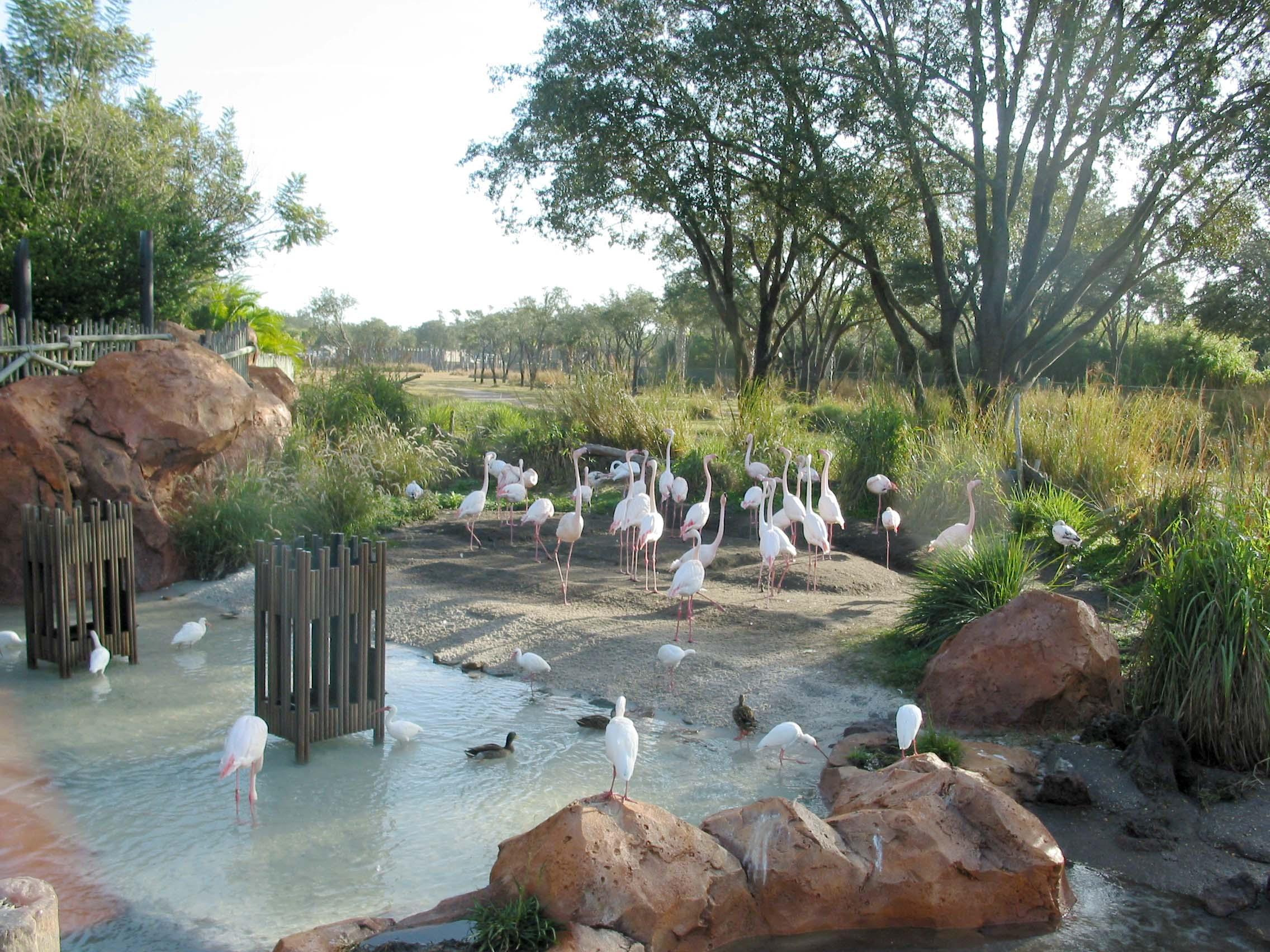 DAK_flamingoes.jpg