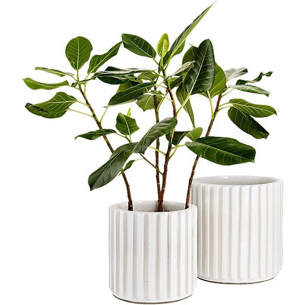 cb2 planter.jpg