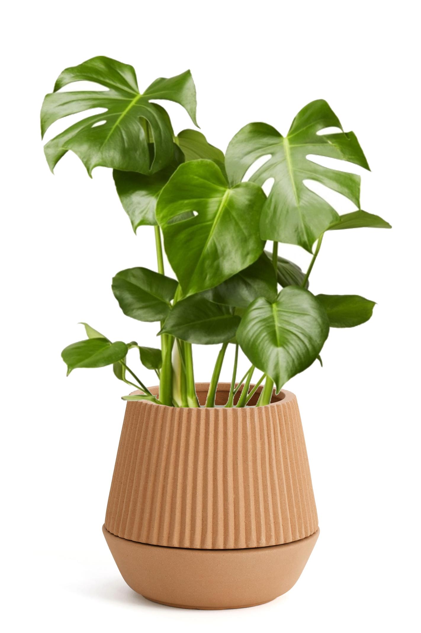 Umbra-Pleated-Planter.jpg