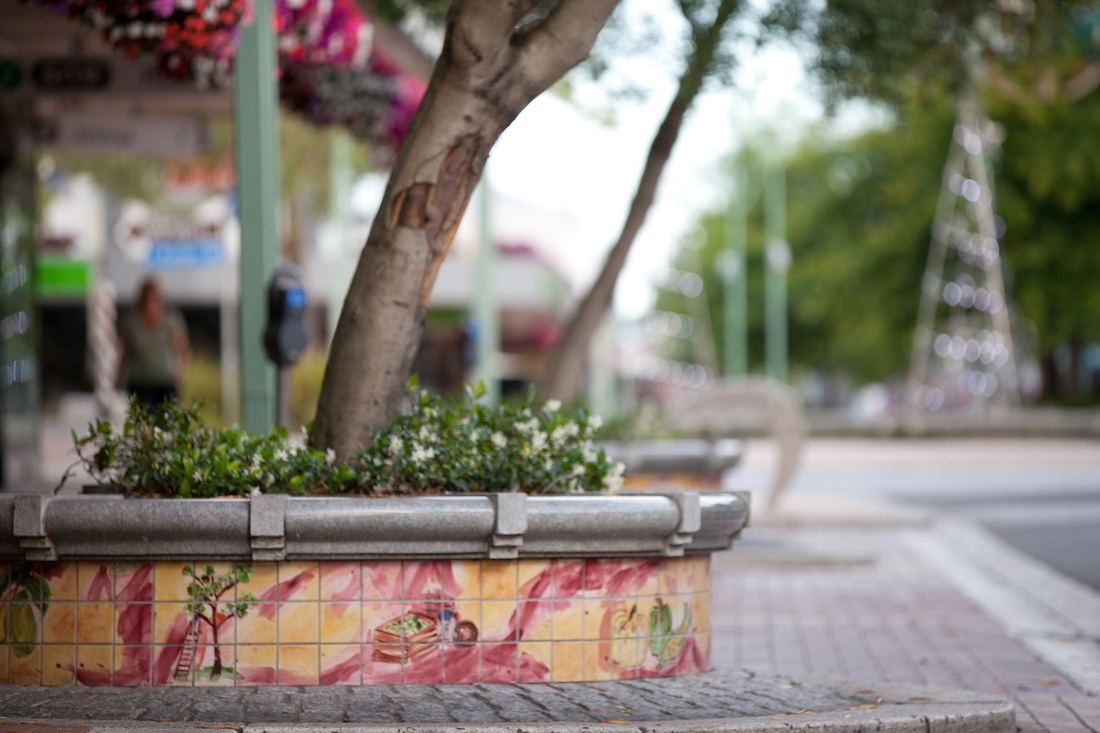 Planter Boxes by Judith Rosamund (Poore)