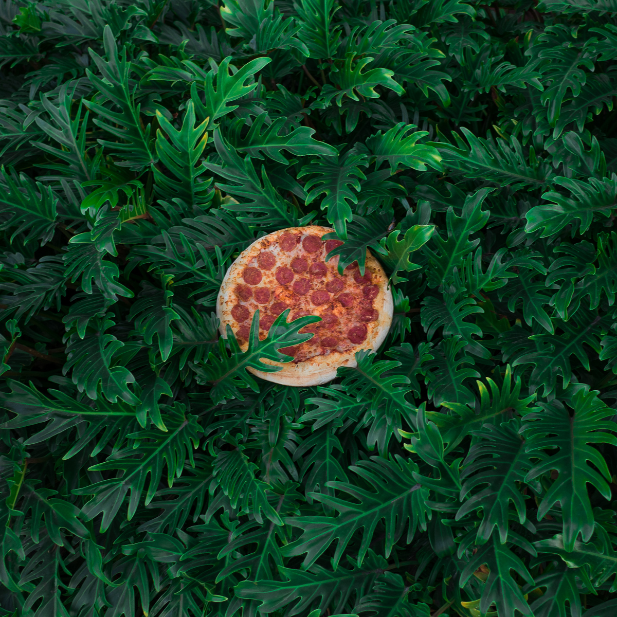 05202017_nota-pizza in the wild 05.jpg