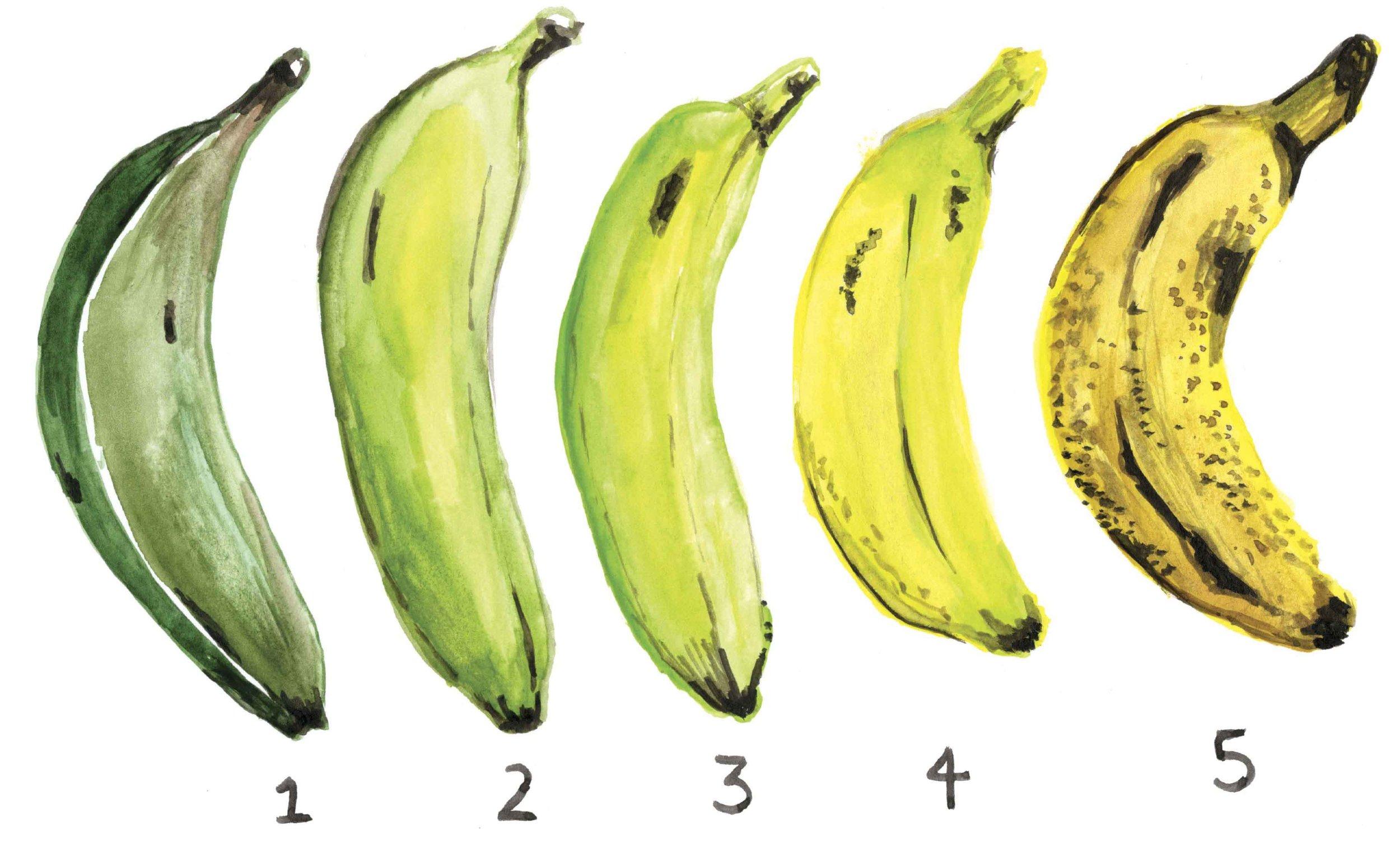 platanos-ilustracion-perdida-comida