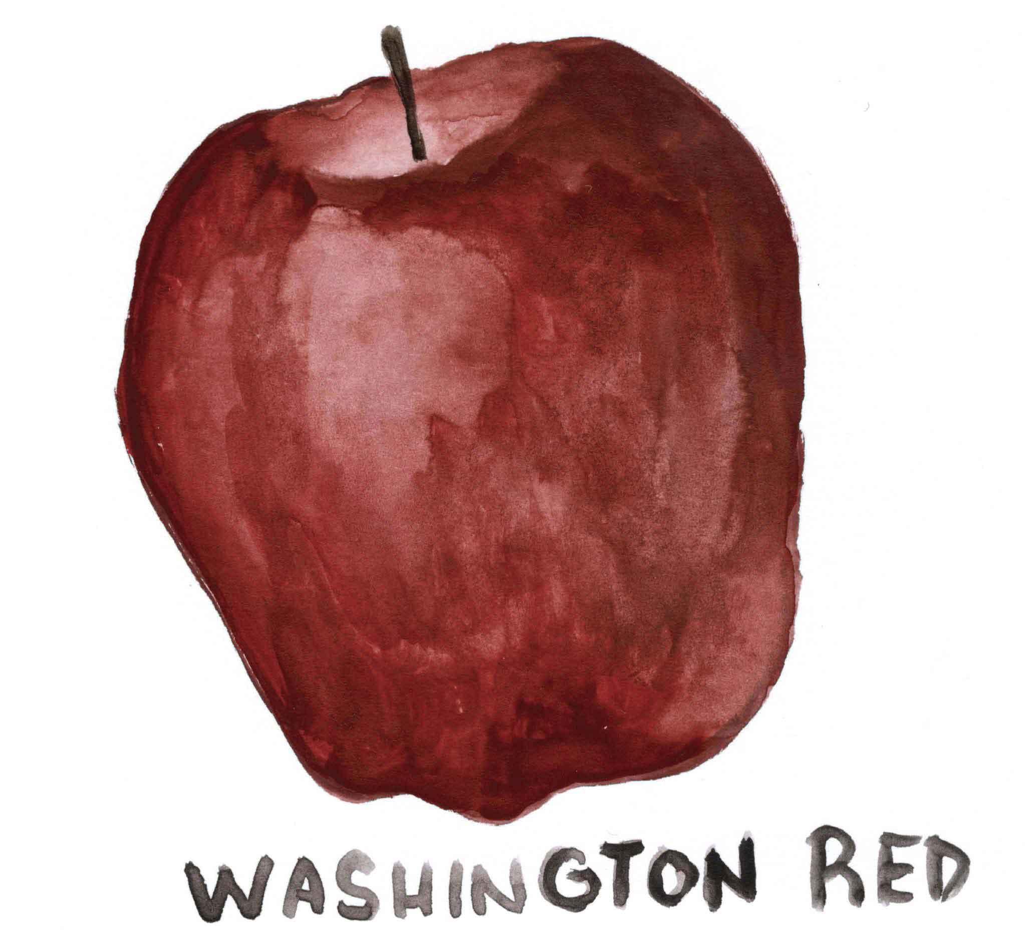 manzana-washington-red-ilustracion