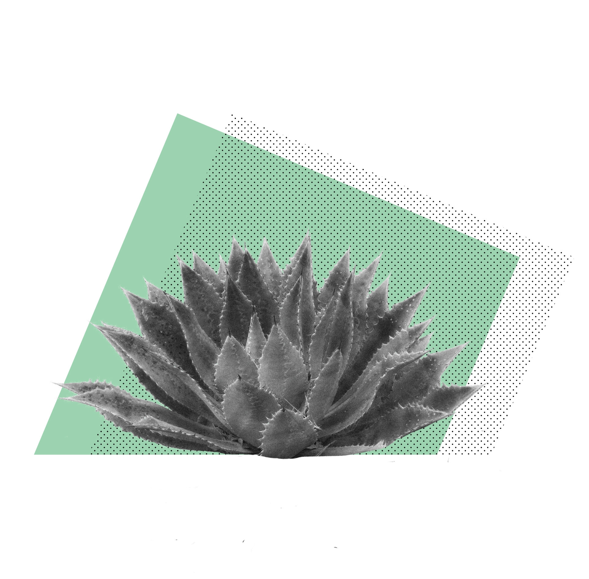 agave3.jpg