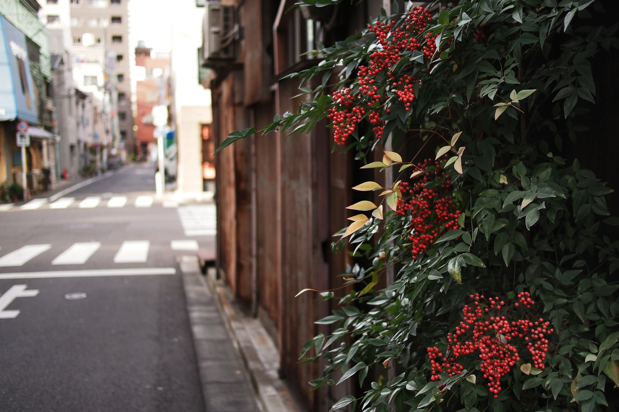 06102019_galeria-tsukiji hiace555.jpg