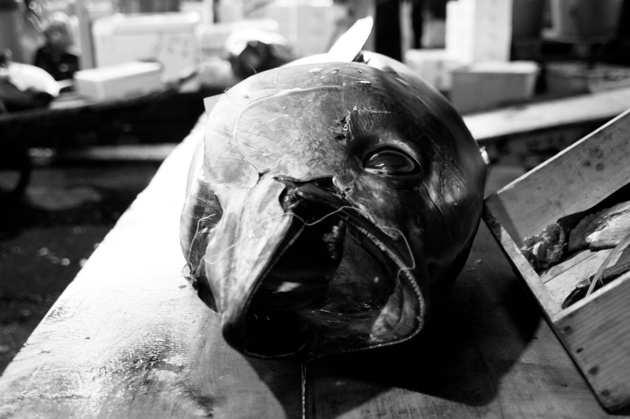 06102019_galeria-tsukiji Rahim Packir Saibo.jpg