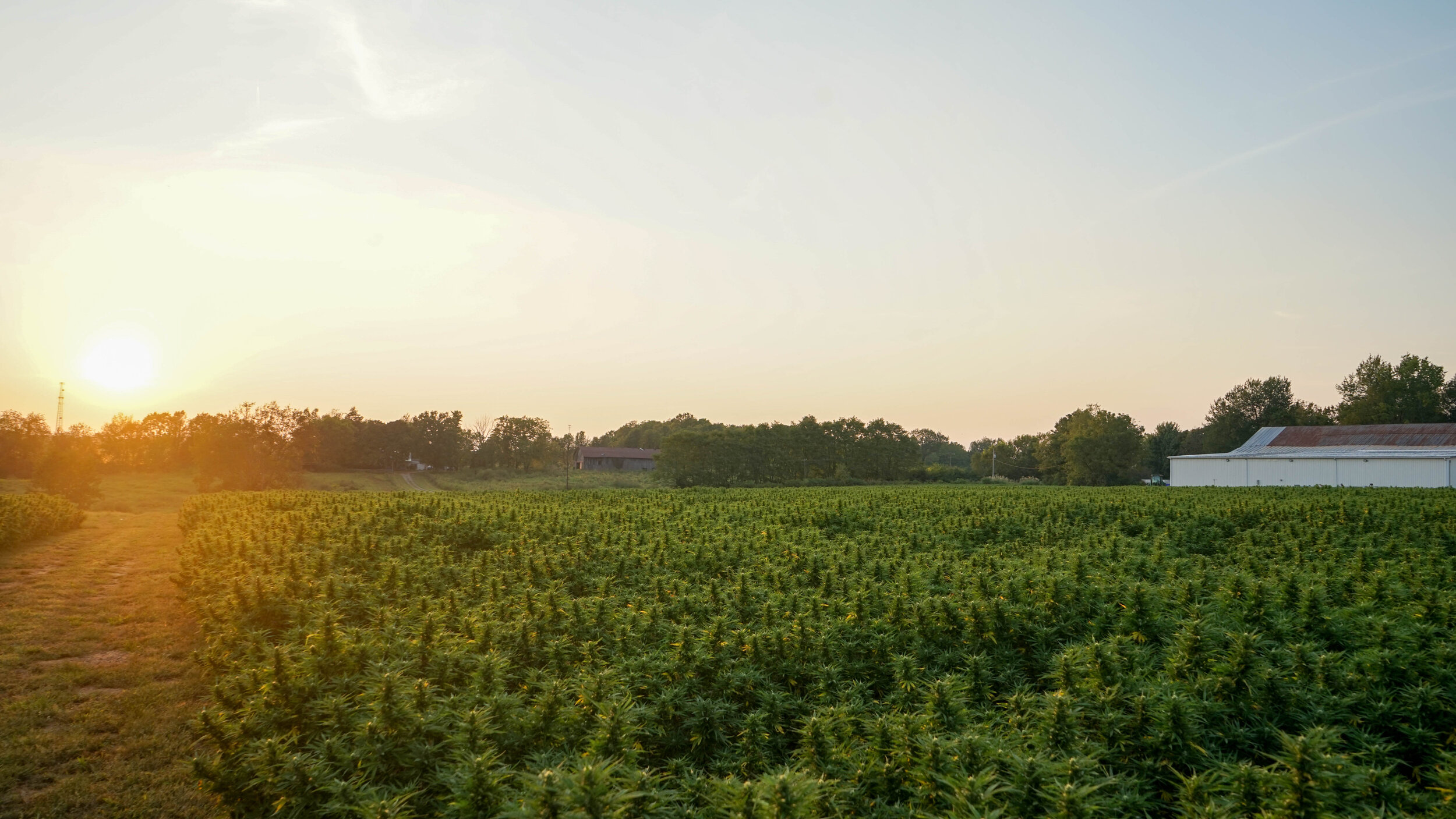 Certified Farming Network - Join the largest hemp farming network in the nation.