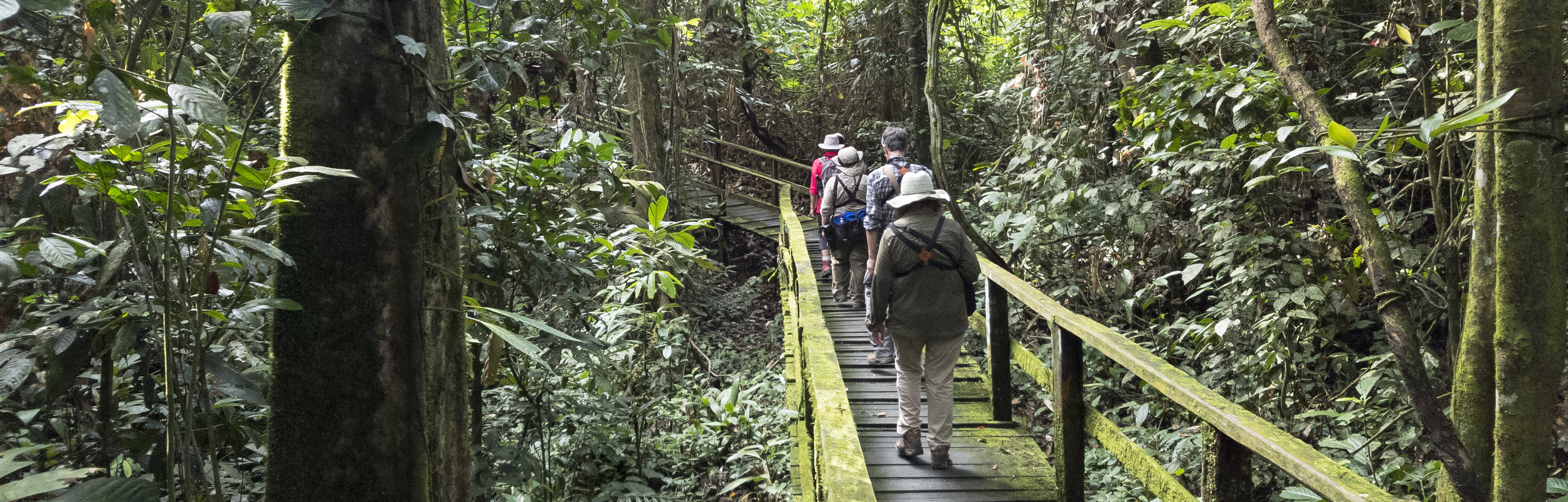 The boardwalk to Gomantong Caves, Malaysian Borneo