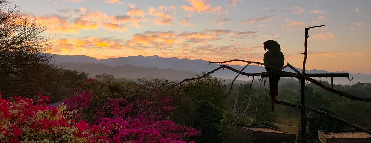 Start of a new day at Rancho Primavera