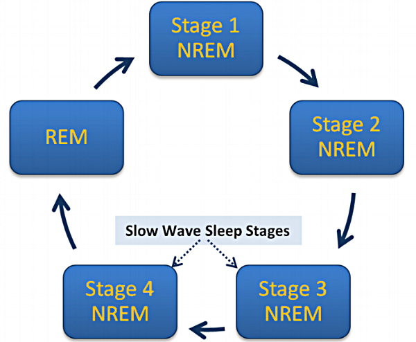 Sleep Stage Cycles.png