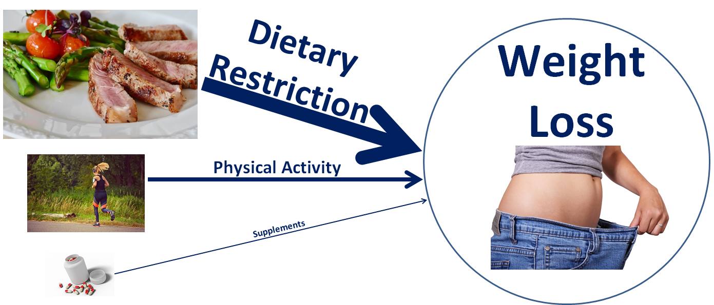 Factors that Affect Weight Loss RTP.png
